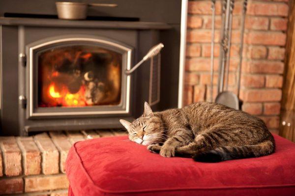 кот спит у камина