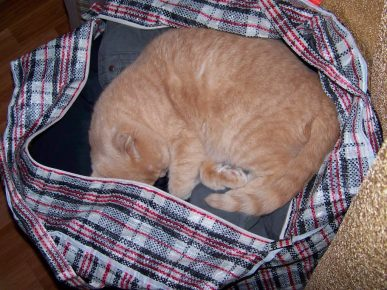 Кот спит в сумке с одеждой