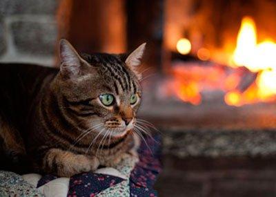 кот у камина