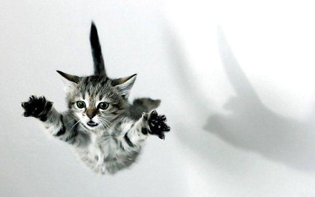 Кот упал из окна как оказать первую помощь