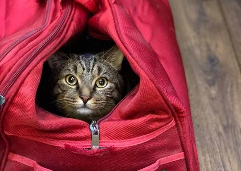 Кот Виктор из Владивостока, которого не пустили в самолет, похудел