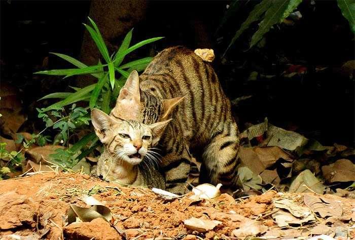 Кот вяжет кошку, фото фотография