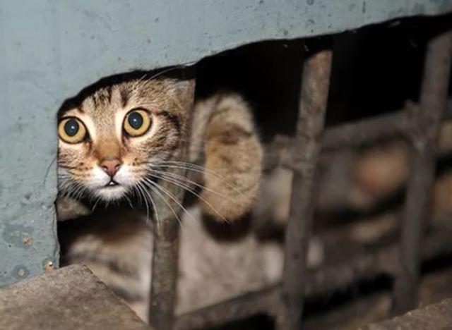 Кот выглядывает из подвала