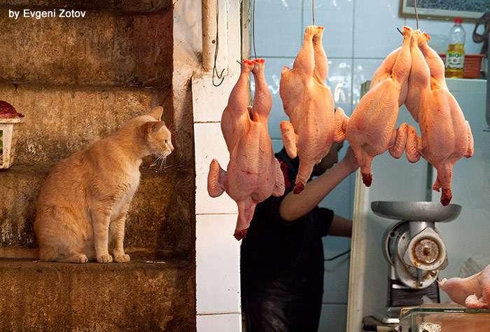 Кот заглядывается на курицу, фото фотография