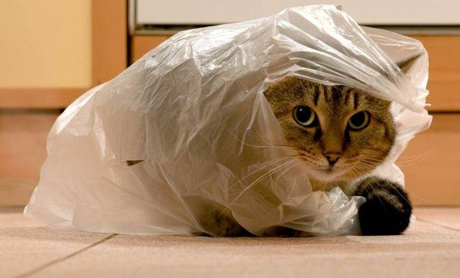 Кот залез в пакет