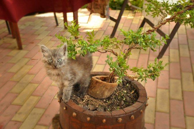 котенок гадит в цветочный горшок