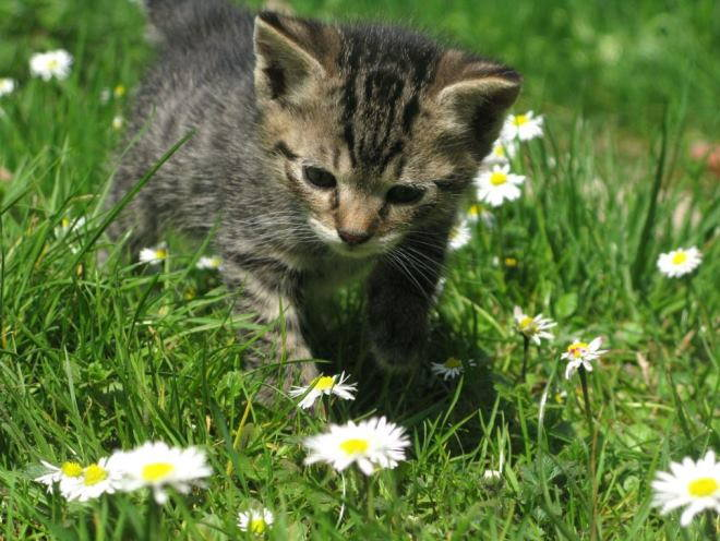 Котенок гуляет по траве