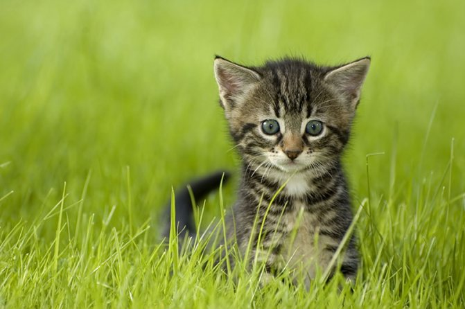 котенок гуляет