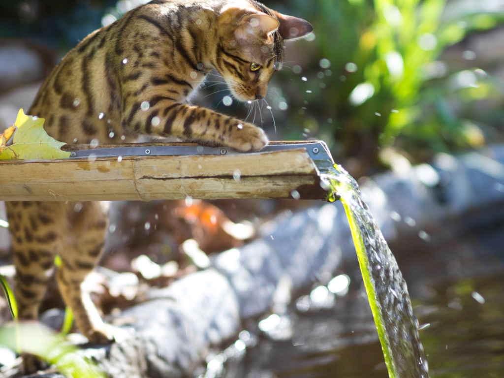 Котенок и вода