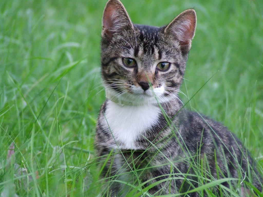 Котенок на прогулке