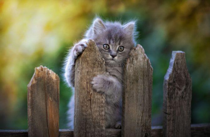 котенок на заборе