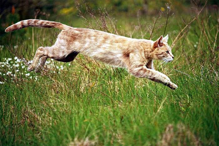 Котенок-подросток куда-то бежит по зеленой траве, фото фотография кошки