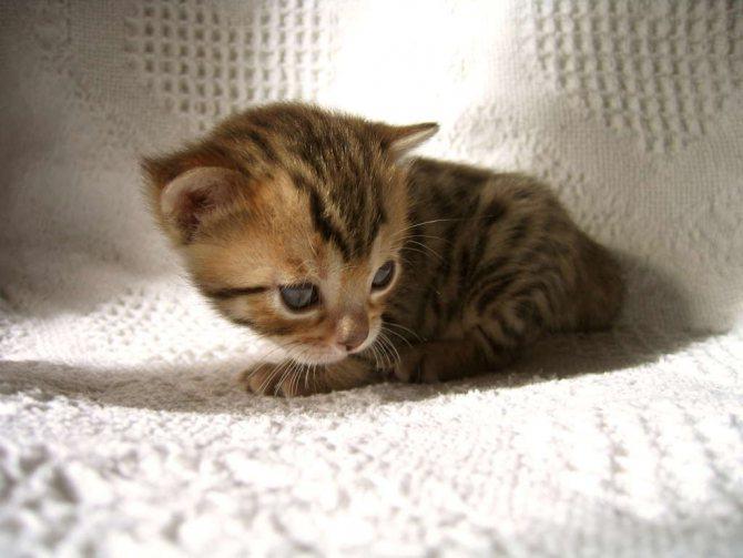 Котенок проснулся