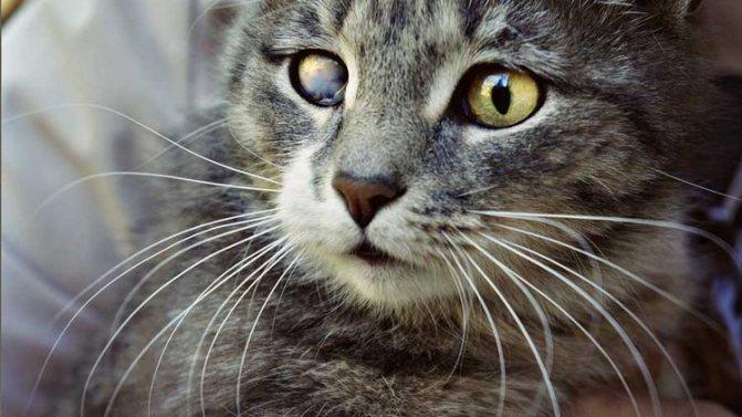 Котенок с больным глазом