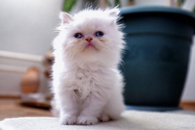 Котенок с косыми глазами