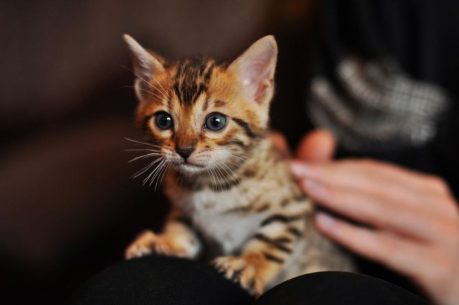 Котёнок табби фото.jpg