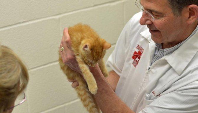 Котенок у врача