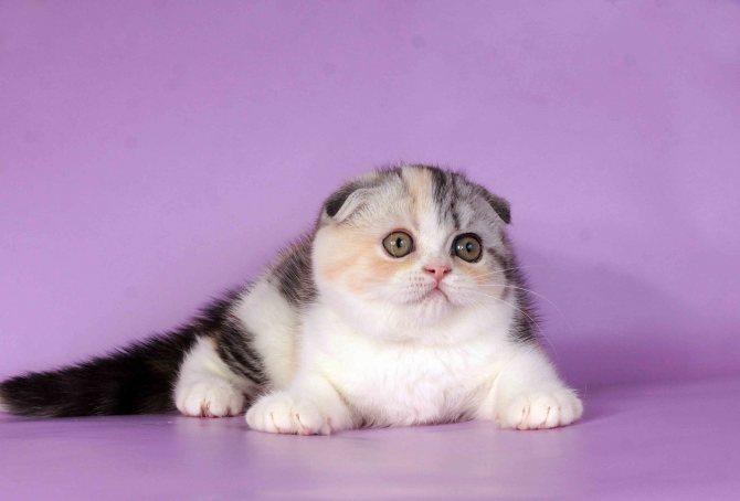 Котенок в 4 месяца