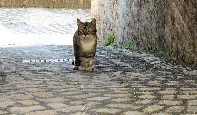 Котик в Риме