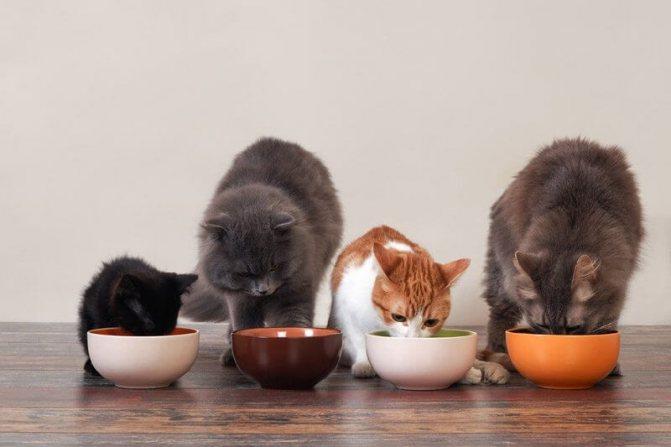 коты едят вместе