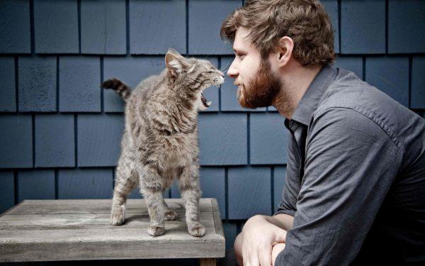 Коты нас понимают