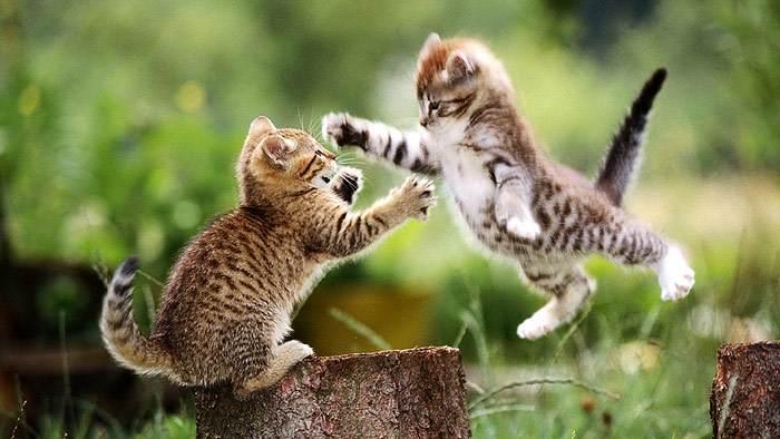 Котята играют друг с другом, фото фотография