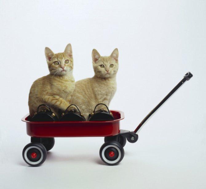 котята путешествуют