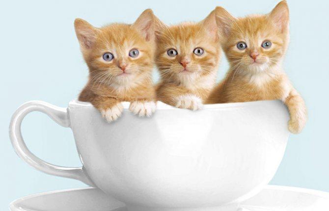 Котята с открытыми глазами