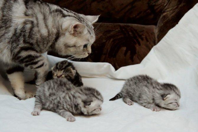 Котята возрастом неделю