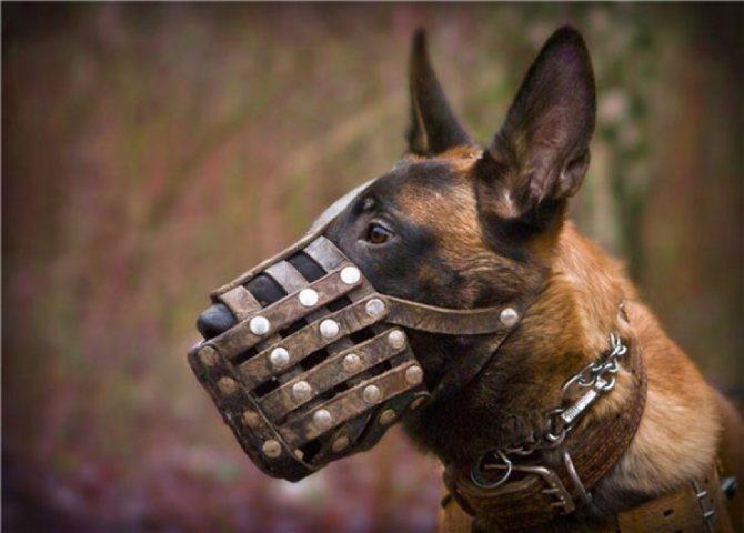 кожаный намордник для собаки