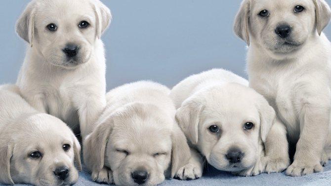 Красивые щенки фото