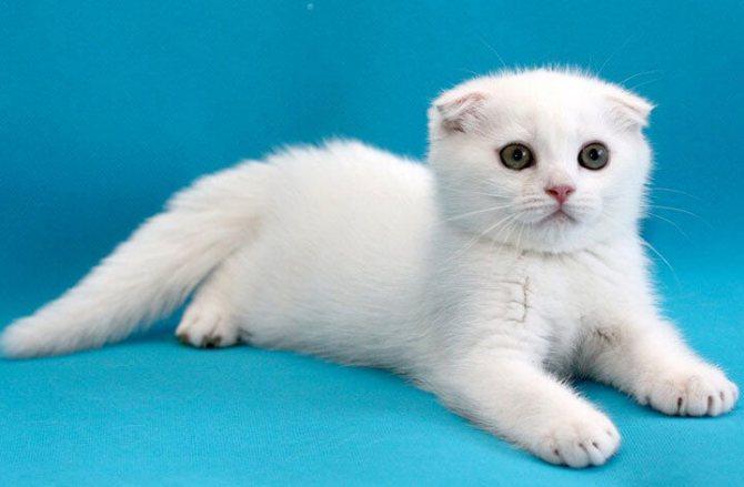 Красота и гармония - идеи для кличек белых котов