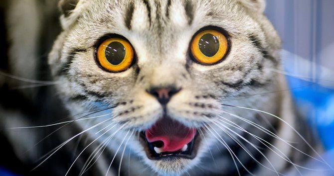 Кровь в моче у кошки с чем связано как лечить