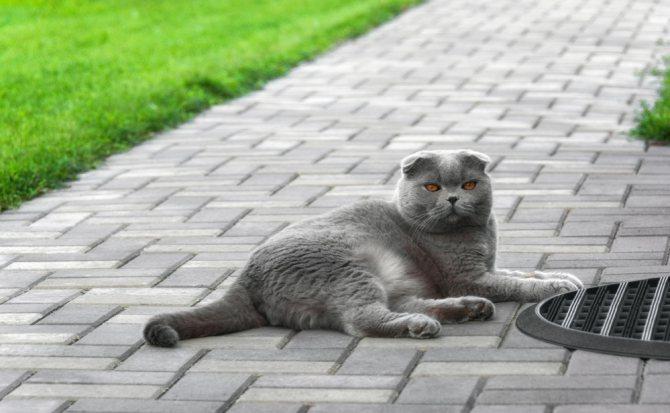 Кровяные выделения у кошки - причины и чем помочь