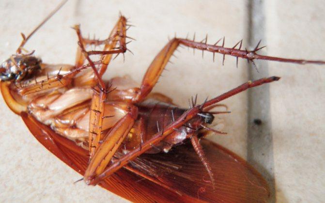 Крупное фото таракана на спине