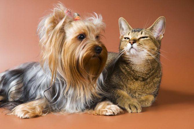 Кто лучше собака или кошка в доме