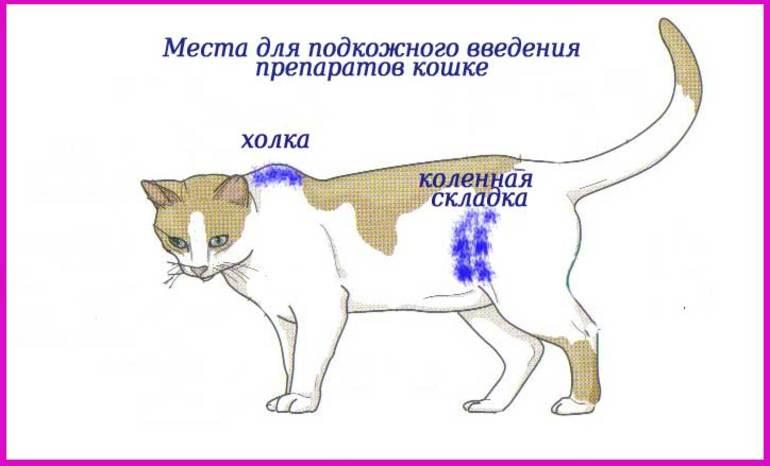 Куда делать укол коту