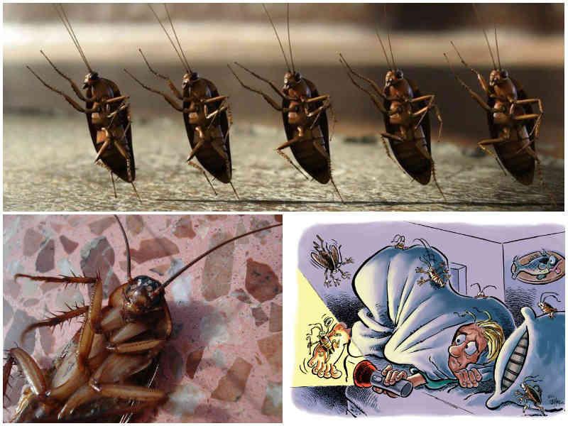 Куда делись тараканы факты