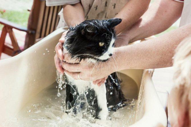 Купание кошки в тазу