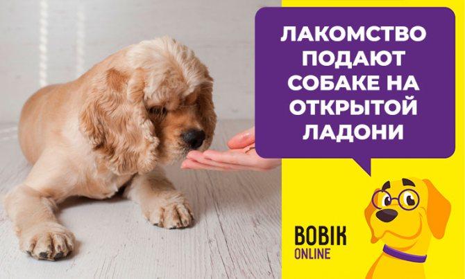Лакомства для дрессировки собак и щенков: как выбрать или приготовить самостоятельно