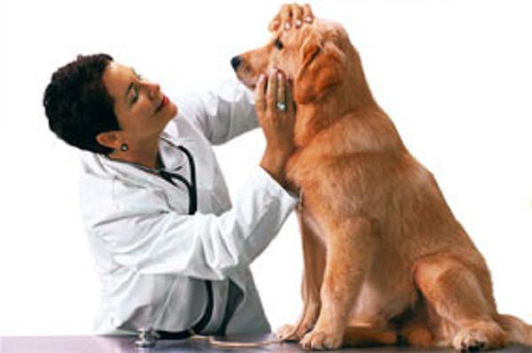 лактобифадол для собак инструкция