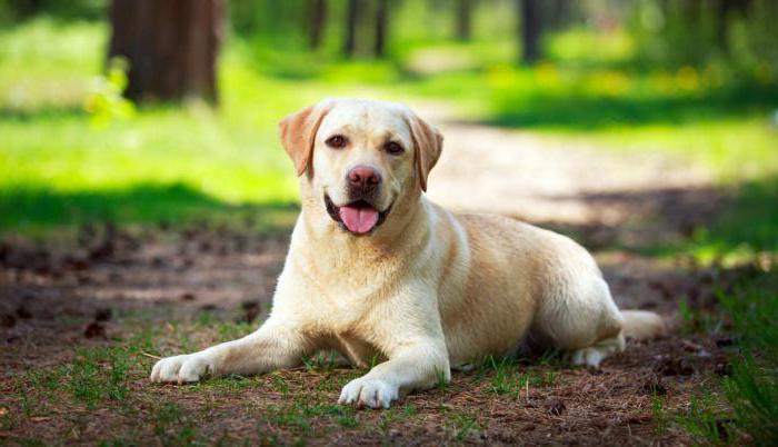 лактобифадол для собак отзывы