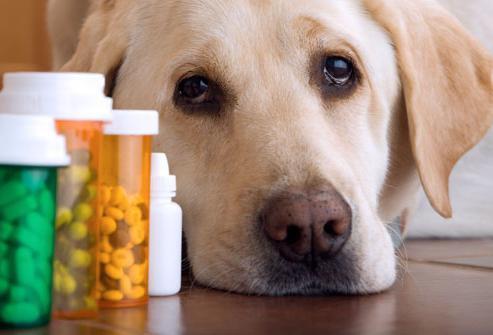 лактобифадол инструкция по применению для собак