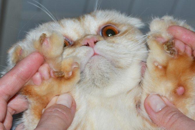 Лапы кота