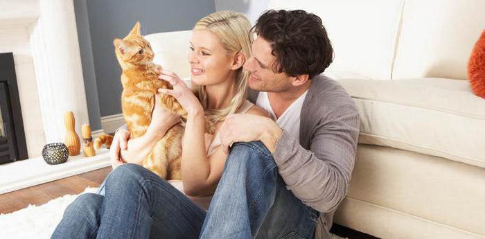 Лечат ли кошки человека