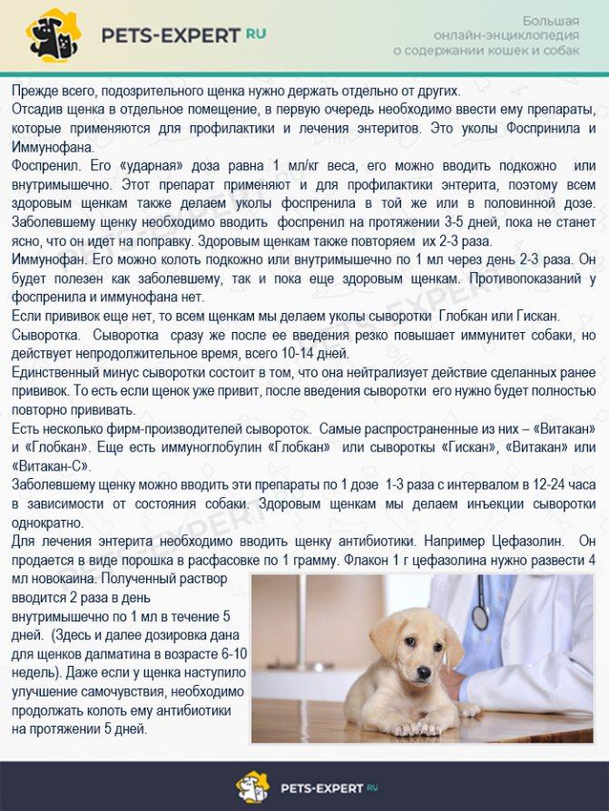 Лечение энтерита у собаки