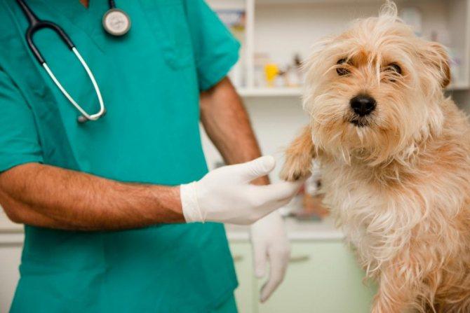 лечение и диагностика колита у собаки