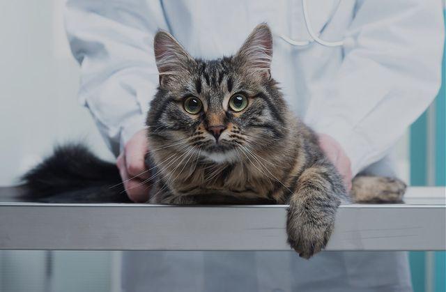 Лечение кошки от паралича