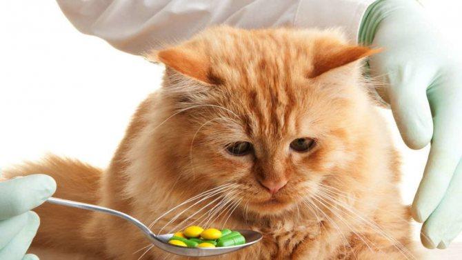 Лечение кота таблетками