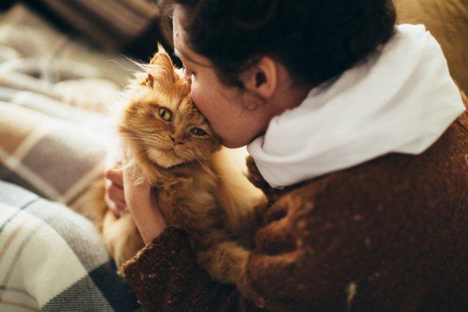 Лечение мочекаменной болезни у котов